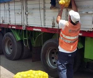 EL SENASA EVITO QUE LIMONES SIN DOCUMENTACIÓN INGRESEN AL CIRCUITO DEL CONSUMO